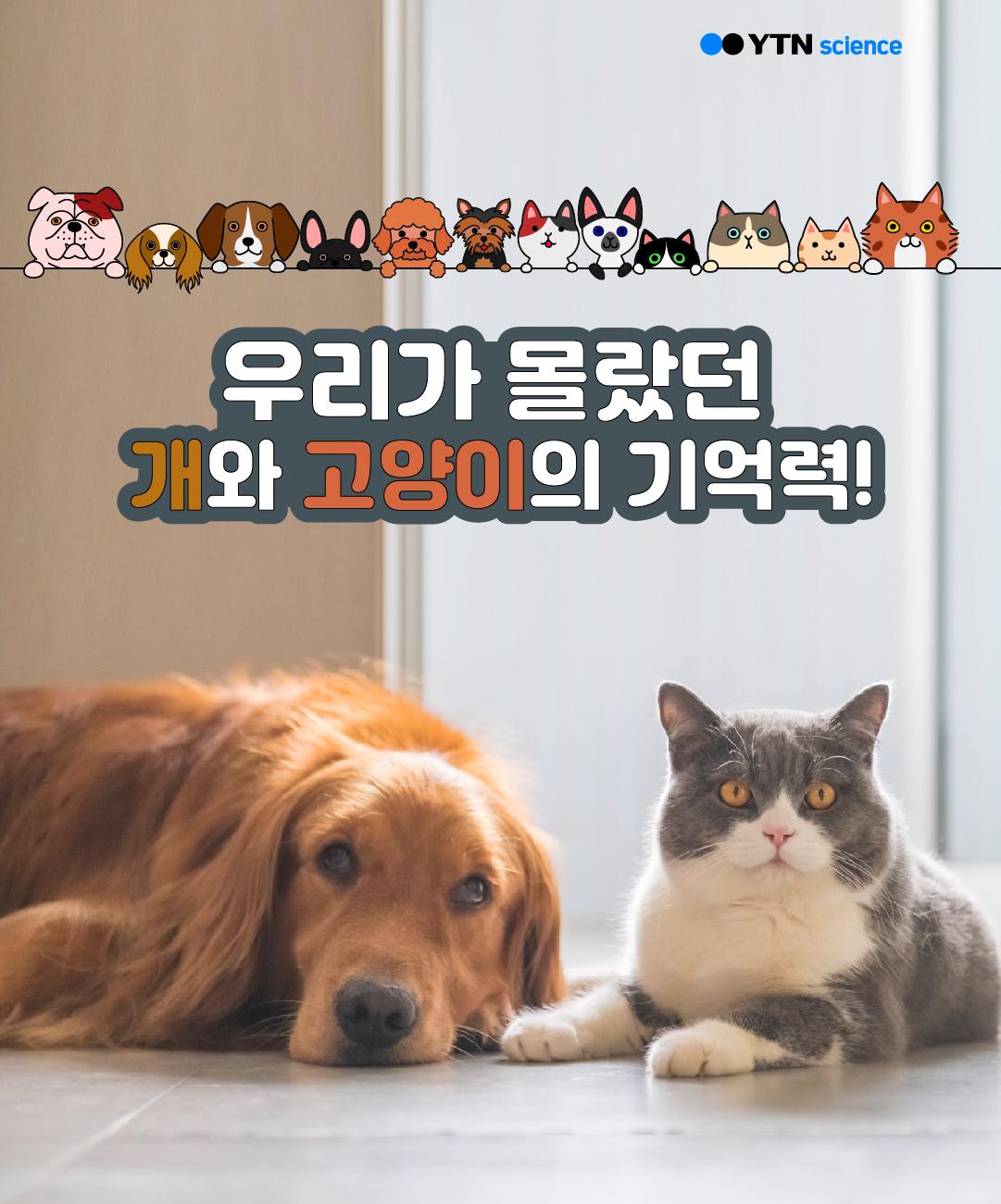 우리가 몰랐던 개와 고양이의 기억력! 이미지