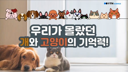 우리가 몰랐던 개와 고양이의 기억력!