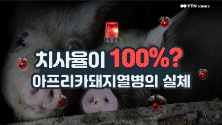 치사율이 100%? 아프리카돼지열병의 실체