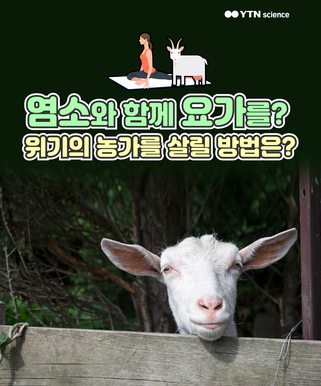 염소와 함께 요가를? 위기의 농가를 살릴 방법은? 이미지