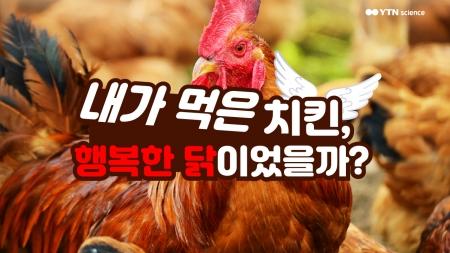 내가 먹은 치킨, 행복한 닭이었을까?