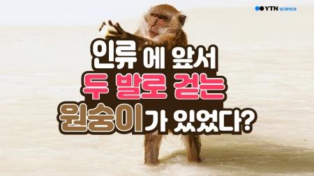 인류에 앞서 두 발로 걷는 원숭이가 있었다?