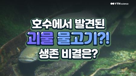 호수에서 발견된 괴물 물고기?! 생존 비결은?