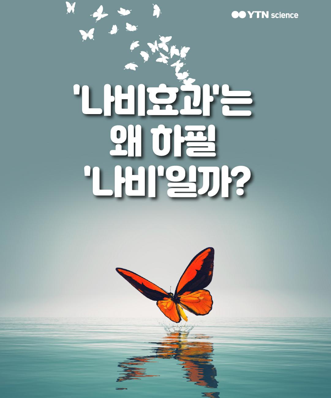'나비효과'는 왜 하필 '나비'일까? 이미지