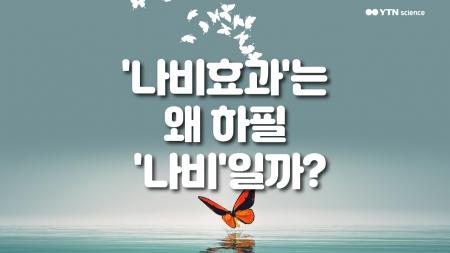 '나비효과'는 왜 하필 '나비'일까?