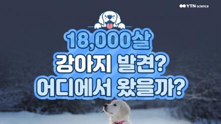 18,000살 강아지 발견? 어디에서 왔을까?