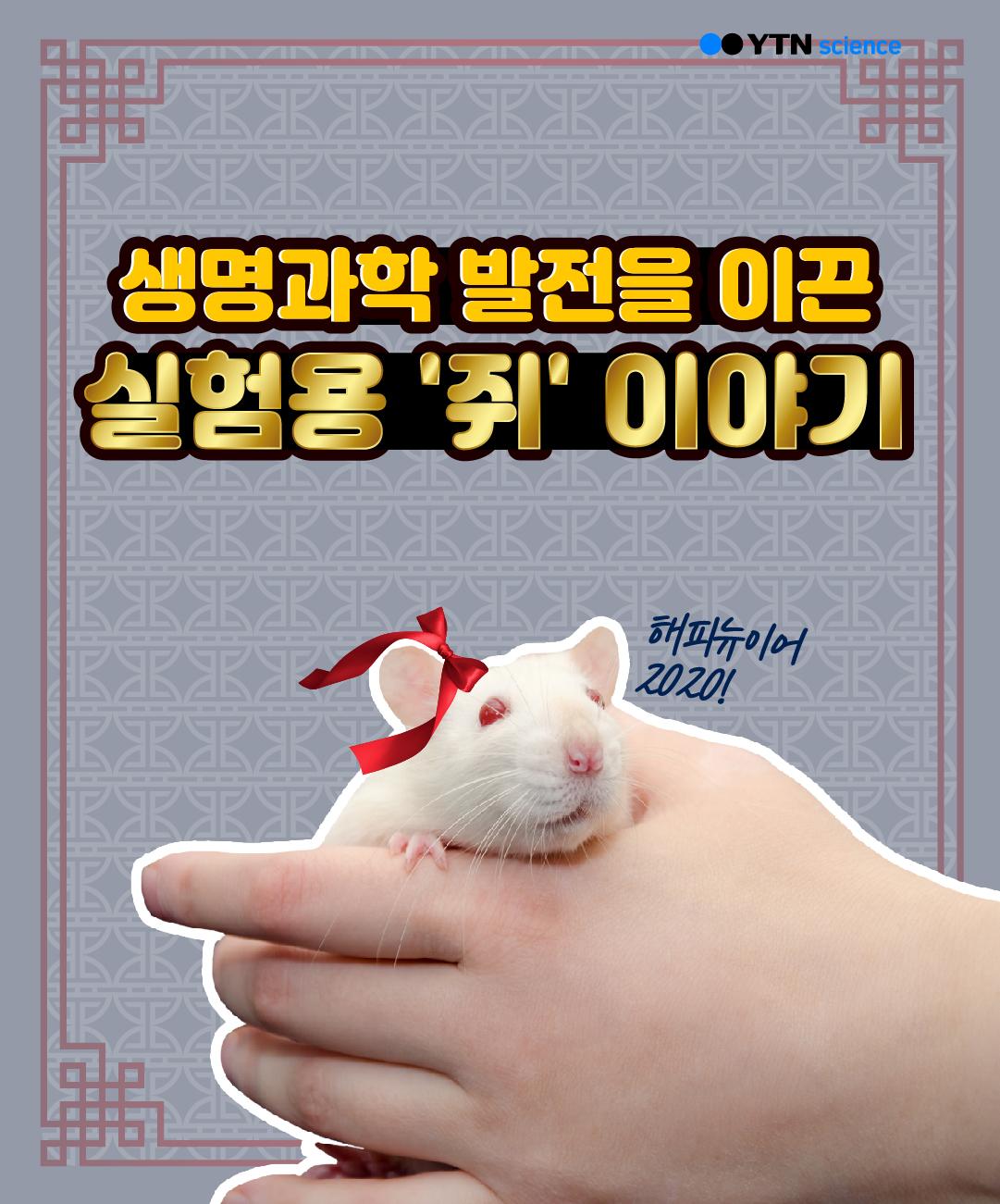 생명과학 발전을 이끈 실험용 '쥐' 이야기 이미지