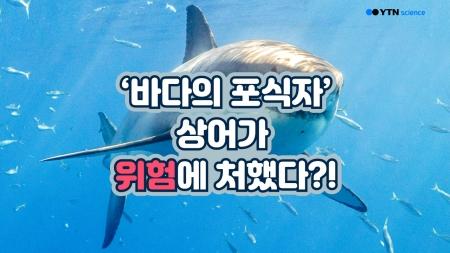 '바다의 포식자' 상어가 위험에 처했다?