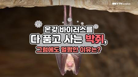 온갖 바이러스를 다 품고 사는 박쥐, 그럼에도 멀쩡한 이유는?