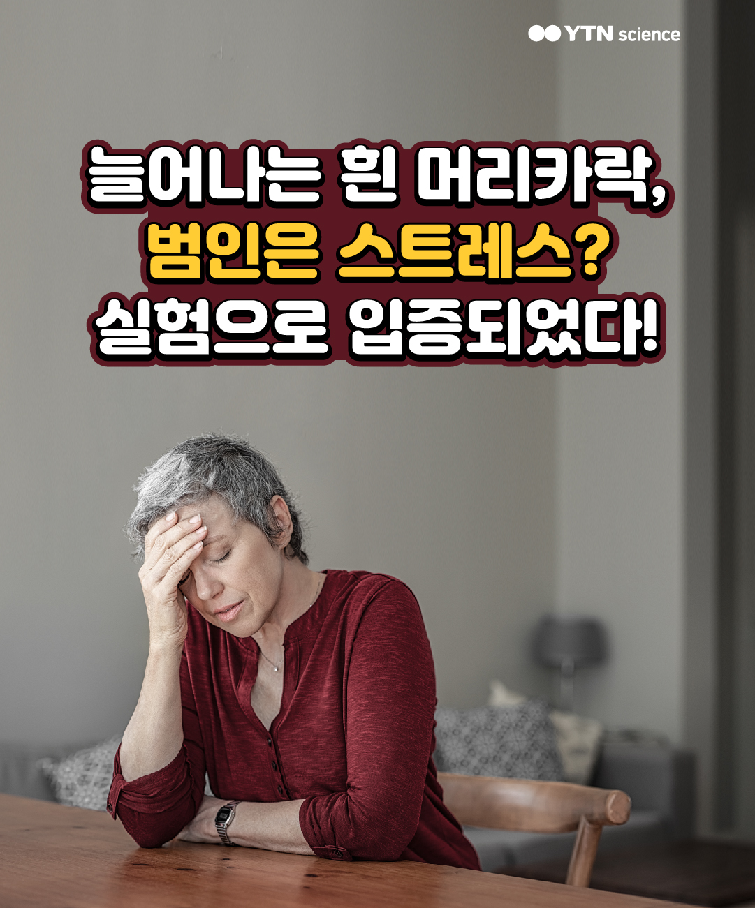 늘어나는 흰 머리카락, 범인은 스트레스? 실험으로 입증되었다! 이미지