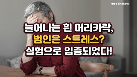 늘어나는 흰 머리카락, 범인은 스트레스? 실험으로 입증되었다!