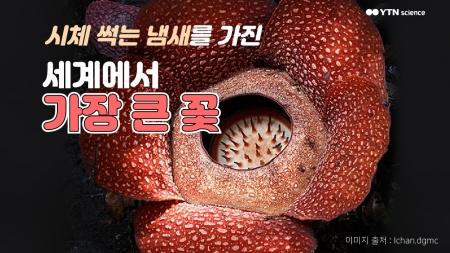 시체 썩는 냄새를 가진 세계에서 가장 큰 꽃