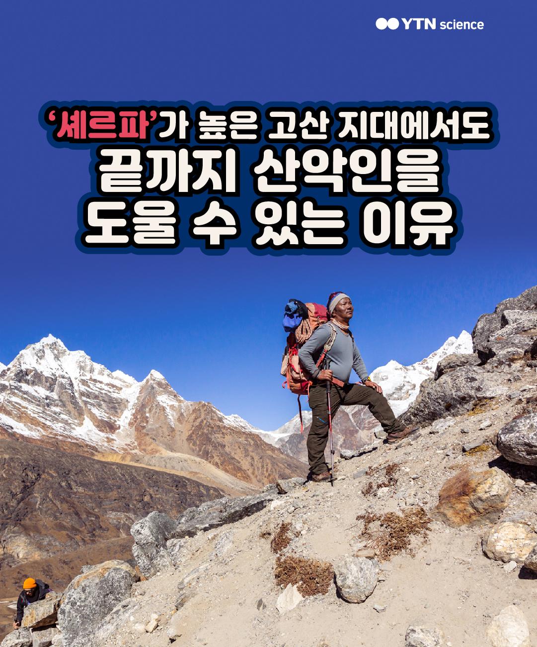 '셰르파'가 높은 고산 지대에서도 끝까지 산악인을 도울 수 있는 이유 이미지