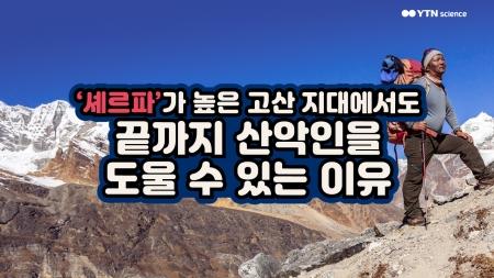 '셰르파'가 높은 고산 지대에서도 끝까지 산악인을 도울 수 있는 이유