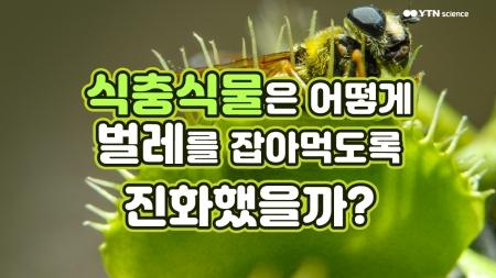 식충식물은 어떻게 벌레를 잡아먹도록 진화했을까?