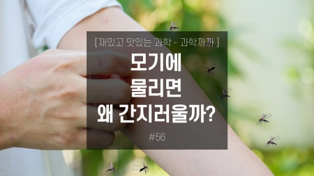 모기에 물리면 왜 간지러울까?