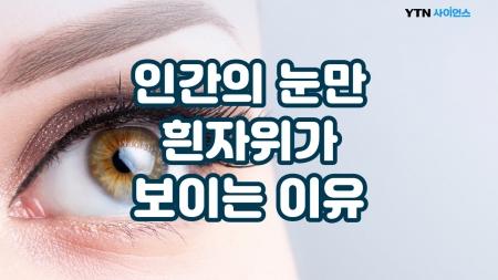 인간의 눈만 흰자위가 보이는 이유