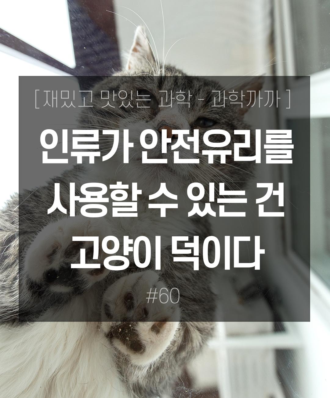 인류가 안전유리를 사용할 수 있는 건 고양이 덕이다 이미지