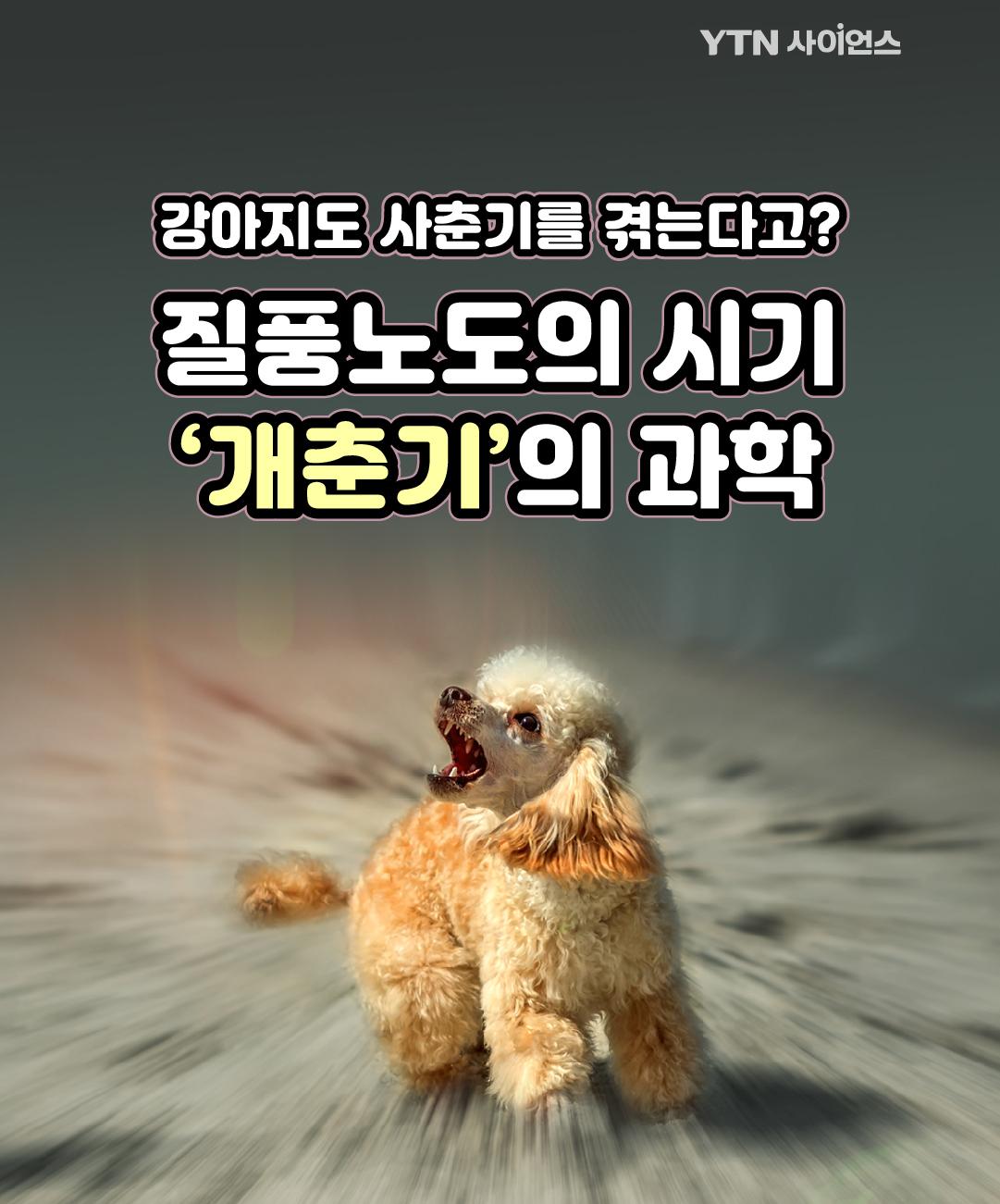 강아지도 사춘기를 겪는다고? 질풍노도의 시기 '개춘기'의 과학 이미지