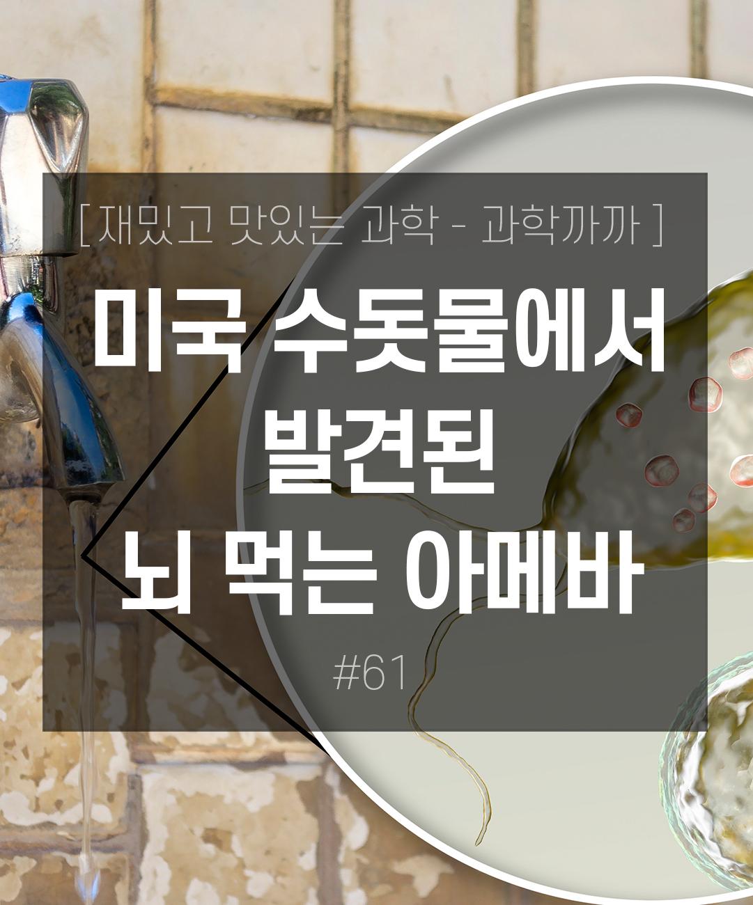 미국 수돗물에서 발견된 뇌 먹는 아메바 이미지