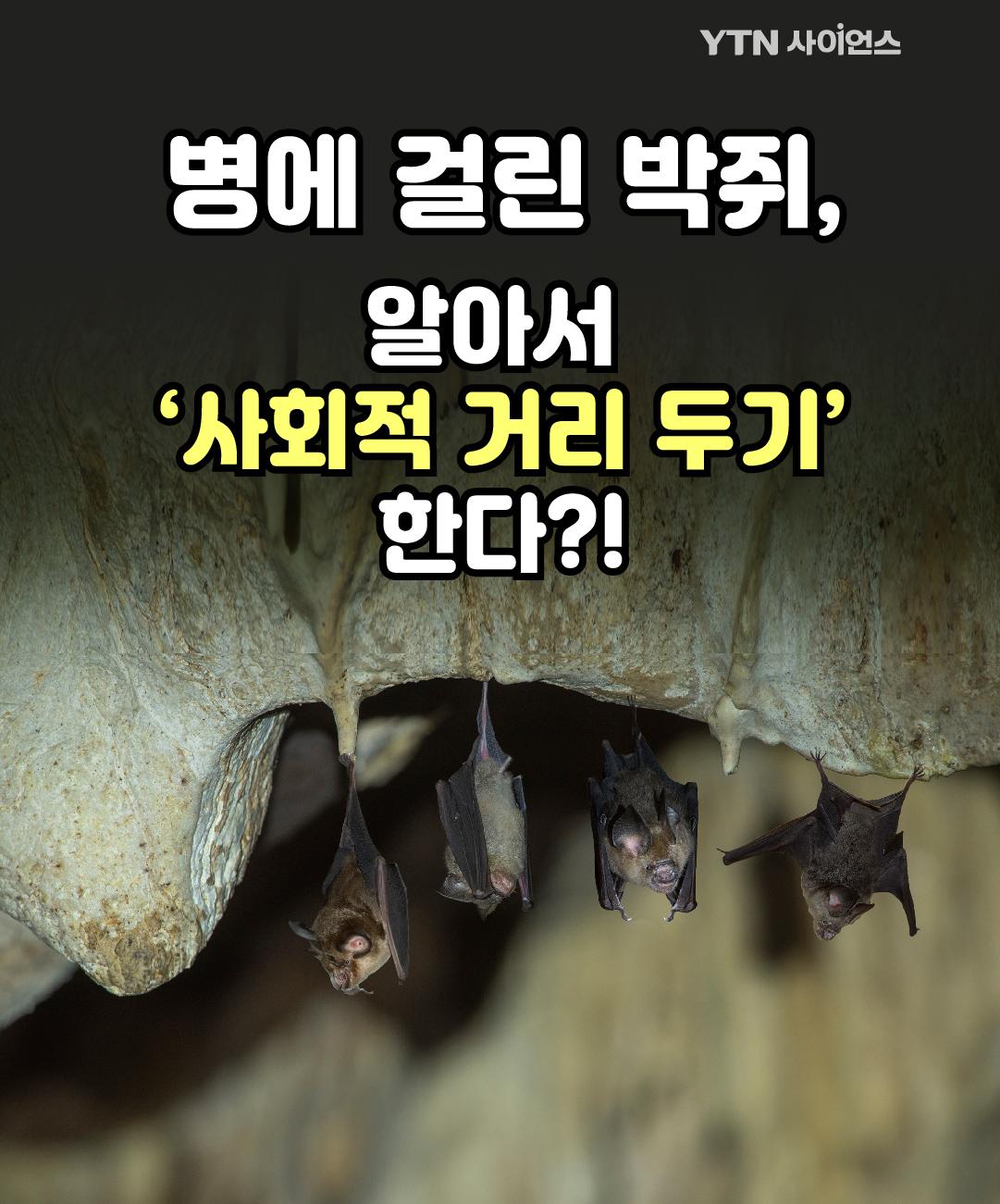 병에 걸린 박쥐, 알아서 '사회적 거리 두기' 한다?! 이미지