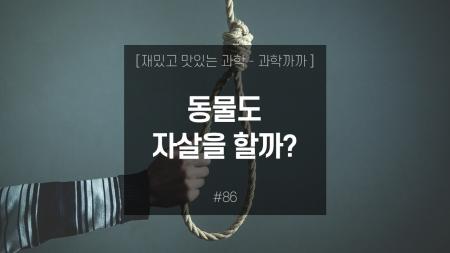 동물도 자살을 할까?