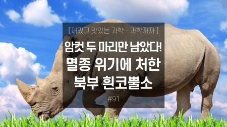 암컷 두 마리만 남았다! 멸종 위기에 처한 북부 흰코뿔소