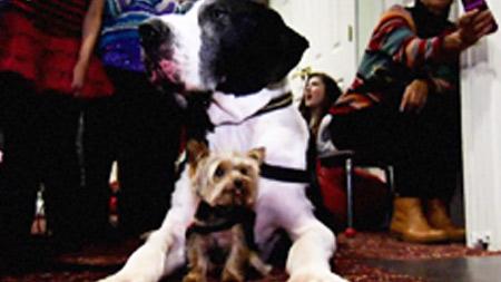 어메이징와일드 9부. 세상에서 가장 작은 애완동물
