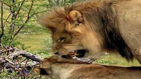 와일드 랭킹 7부. 뜨거운 사랑을 나누는 동물 TOP 10