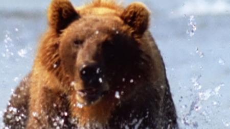 킬러의 본능_4부_지상 최고의 파이터 회색곰