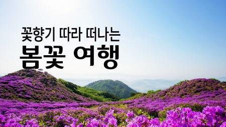 꽃향기 따라 떠나는'봄꽃 여행'