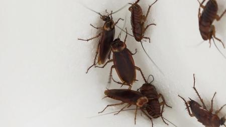 [이지 사이언스] 곤충과 해충 사이