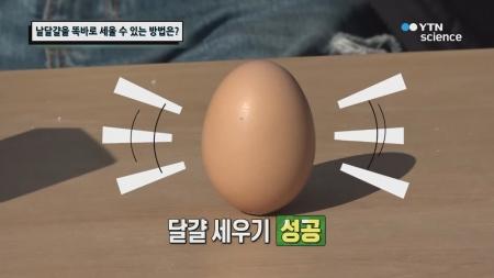 날달걀을 똑바로 세울 수 있는 방법은?