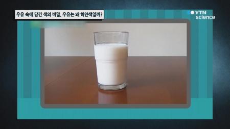 우유 속에 담긴 색의 비밀, 우유는 왜 하얀색일까?