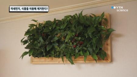 미세먼지, 식물을 이용해 제거한다?