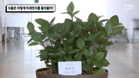 식물은 어떻게 미세먼지를 줄여줄까?