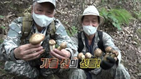 [기술자들] 가을 산의 귀한 선물, 버섯