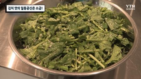 김치 맛의 일등공신은 소금!