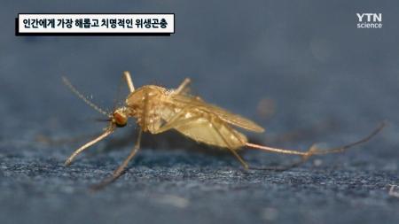 인간에게 가장 해롭고 치명적인 위생곤충