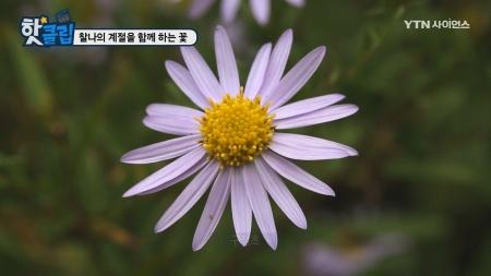 찰나의 계절을 함께 하는 꽃