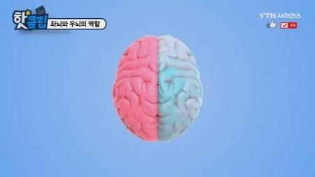 좌뇌와 우뇌의 역할
