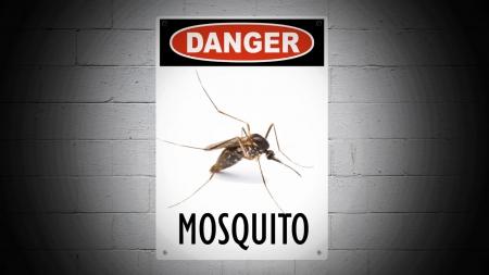 지구상 가장 위험한 동물, 모기