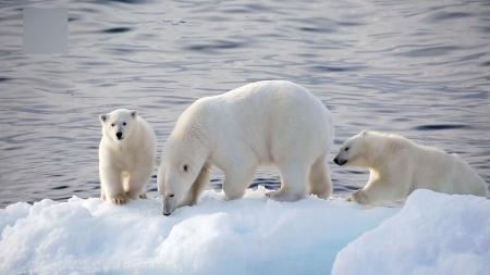 [특별기획, 북극] 1부. 빙하의 땅에 찾아온 여름