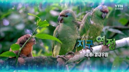 생명 탐사 지구로의 여정_18회 세계의 열대우림