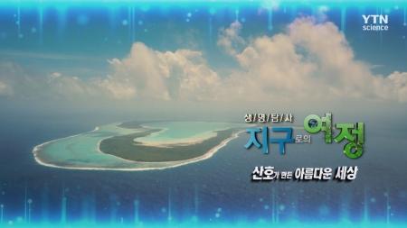 생명 탐사 지구로의 여정_19회 산호가 만든 아름다운 세상