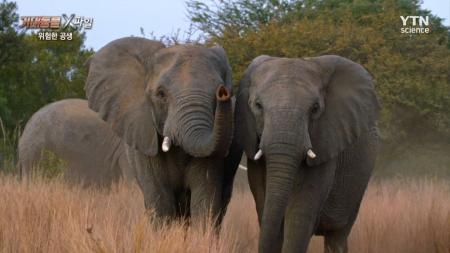 거대동물 X파일_03회_위험한 공생 코끼리와 코뿔소