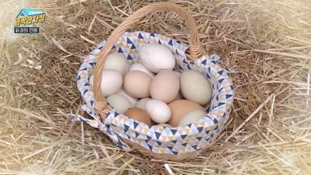 [지헌이네 과학만사성 4회] 달걀의 과학