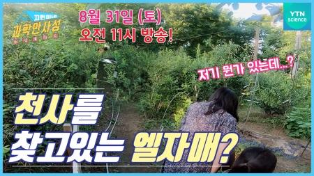 [12화 예고] 엘 자매의 천사를 찾아라?!
