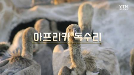 9회 아프리카 독수리