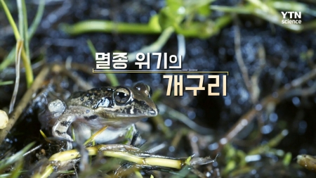 10회 멸종 위기의 개구리